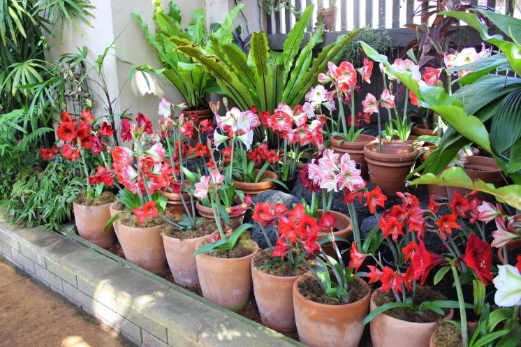 Inside a Garden in Balboa Park