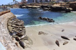 La Jolla Cove, home of many Sea Lions!